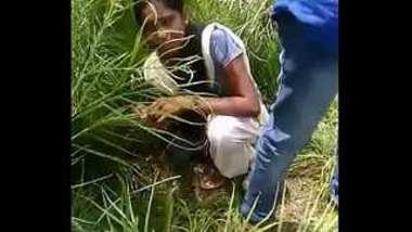 Desi collage girl caught when fucking